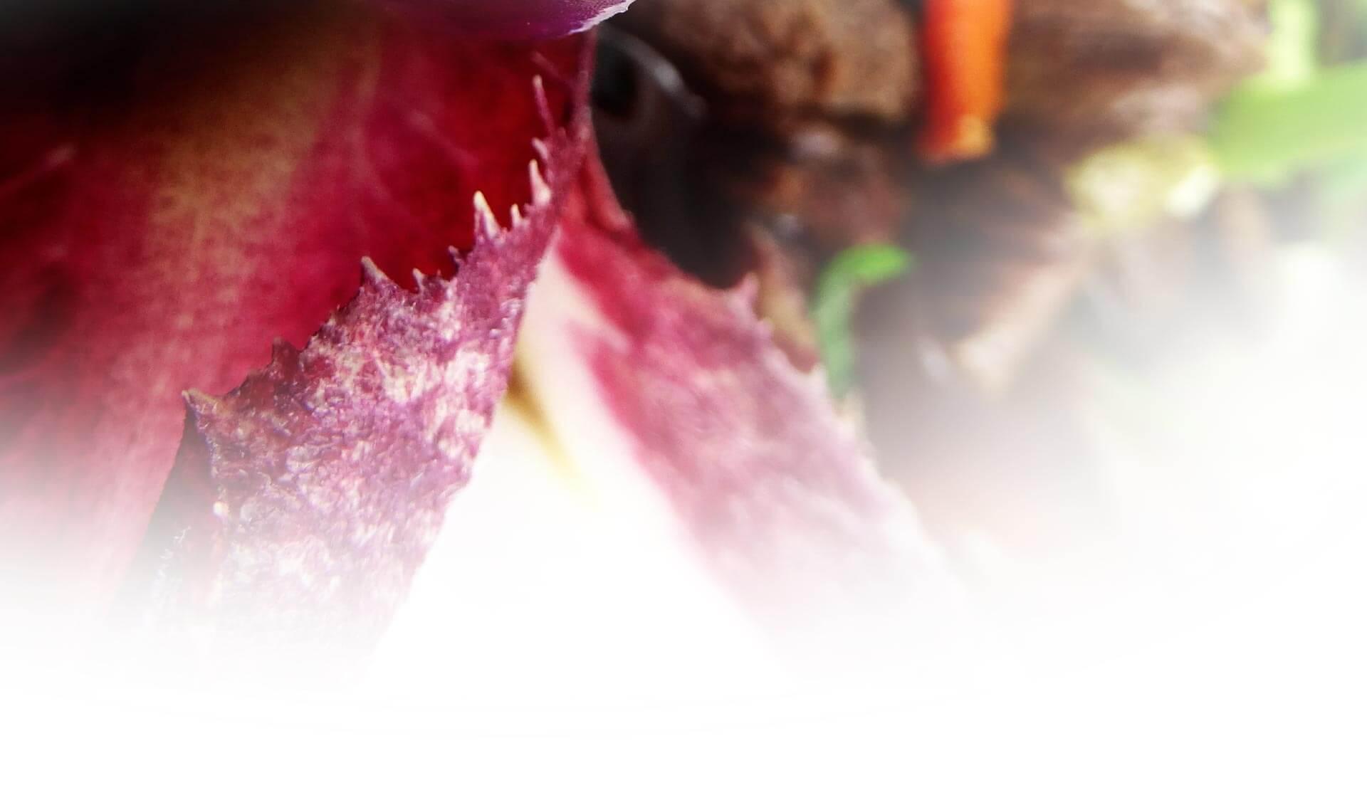 legumes-asiatique